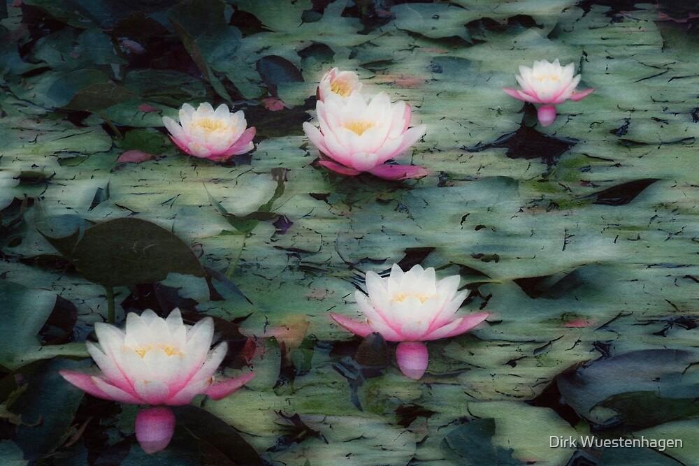 Waterlily Impressions by Dirk Wuestenhagen