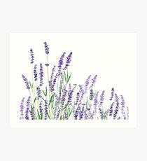 lila Lavendel horizontale Aquarell Kunstdruck