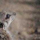 meercat by meegs1
