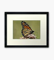 Monarch up close... Framed Print