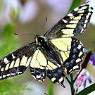 Butterfly by neva2010