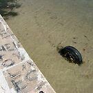 Letters to Them - Boca Ciega Bay, St. Petersburg, FL by Danielle Ducrest