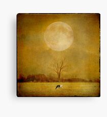 One Cow Canvas Print