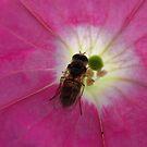 Sweet Nectar... by supernan