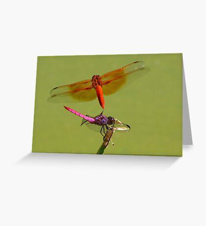 Dragonflies ~ Roseate Skimmer & Flame Skimmer Greeting Card