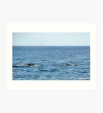Whale Watch Art Print