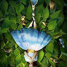Hanged man by Catrin Welz-Stein
