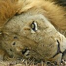 Sleepy big cat(Go away!) by Anthony Goldman