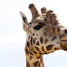 Giraffe by Scarlet
