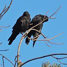Crow kids are sooooooo needy by Lenny La Rue, IPA