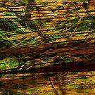 Emerald Wood by juancmorales