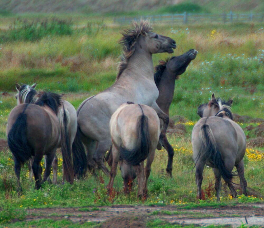 Wild Horses by brianfuller75