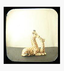 Giraffe Love TTV Photographic Print