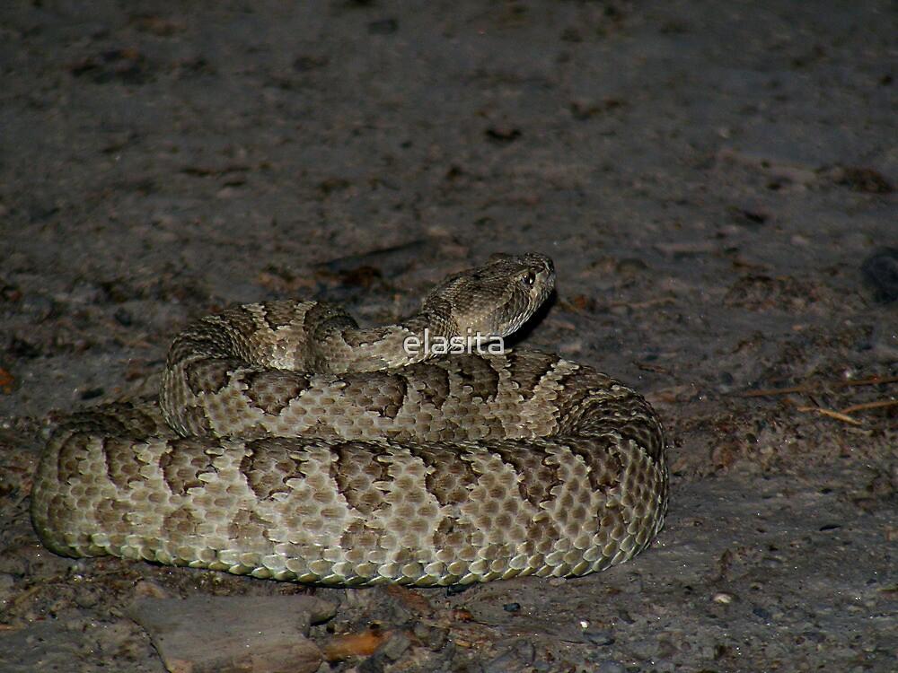 Great Basin Rattlesnake by elasita