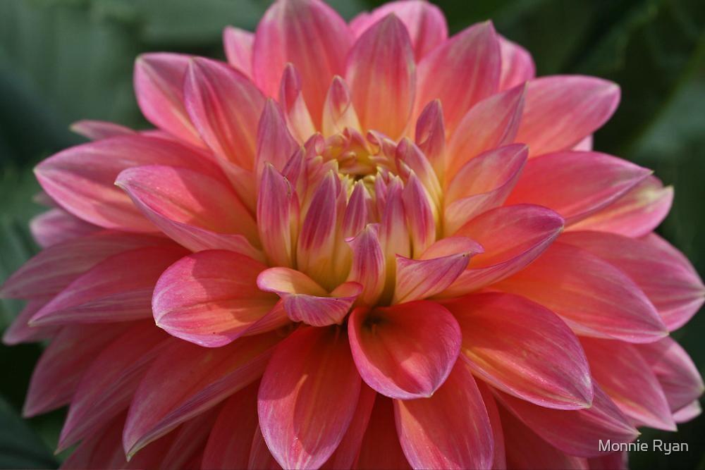 Splash of Pink by Monnie Ryan