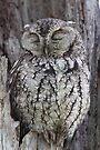 Sleepy Owl by WorldDesign