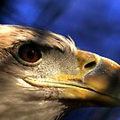 Close Encounter by Larry Trupp