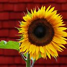 Happy Flower :) by Susie Peek