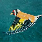 Goldfinch in Flight by eolai