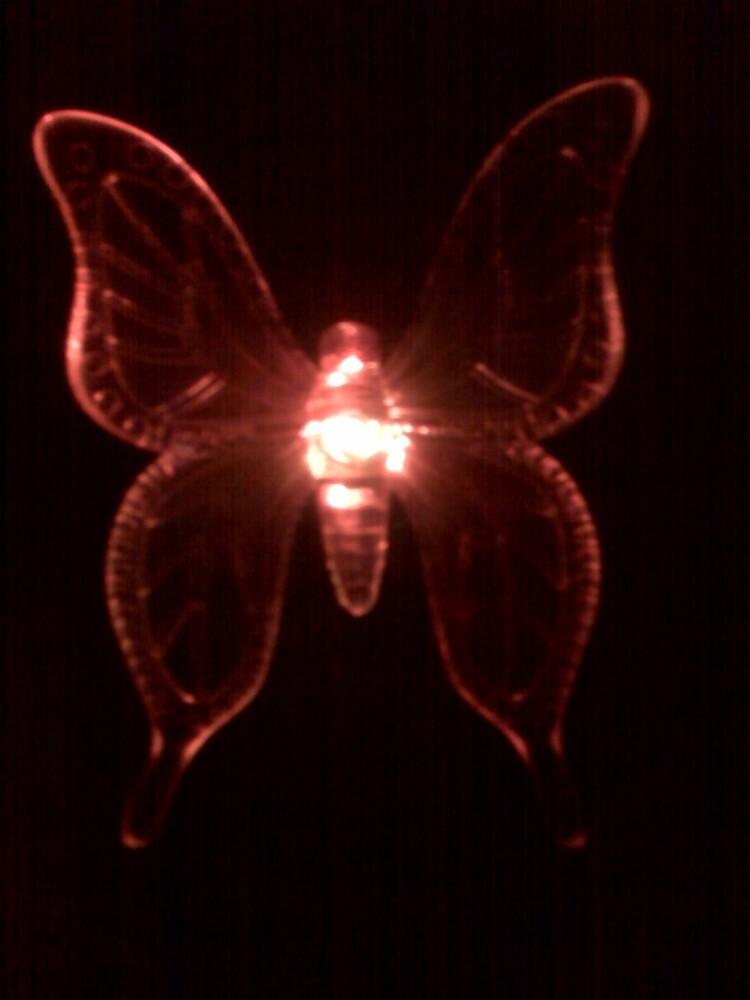 Butterfly in Orange by Dan McKenzie
