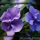 Purple reunion by jalewin