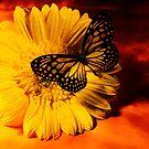 Sunshine by AngelinaLucia10