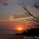 Twiggy sunset by jalewin