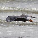 Heron Coast von lizdomett