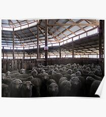 The Holding Pen - Deeargee Woolshed, Northern Tablelands, NSW, Australia Poster
