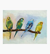 Four Parakeets Photographic Print