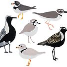 Plethora of Plovers by Holly Faulkner