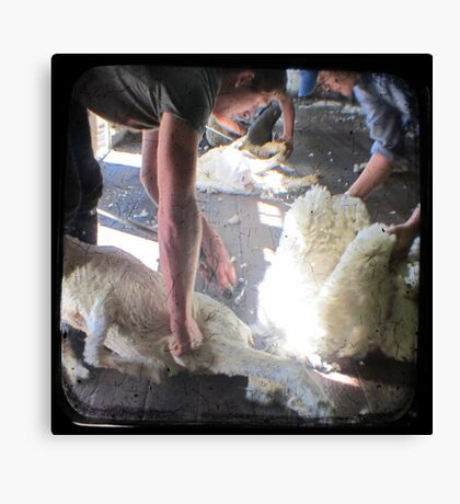 The Shearer & The Rouseabout - TTV Canvas Print