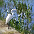Great Egret by David Smith