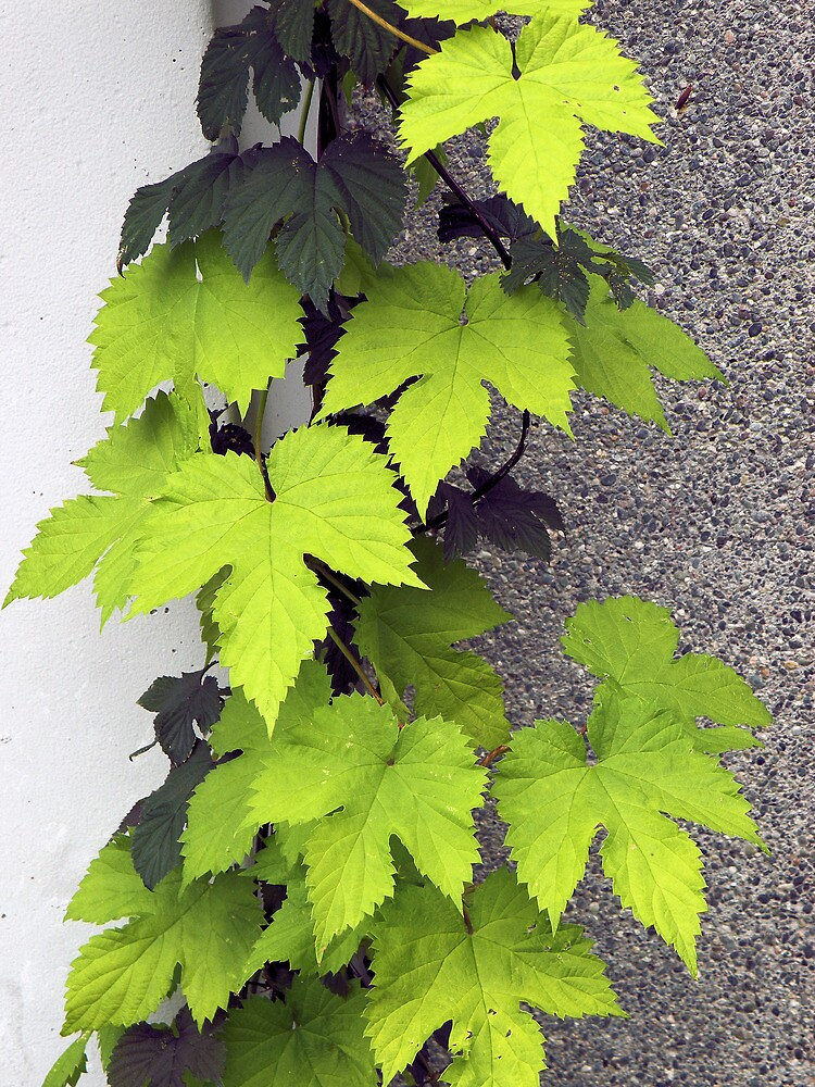Leafy Vine by quirkydame