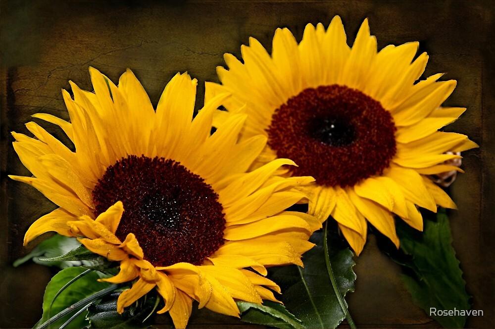 """Let's Snuggle Sunshine ..."" by Rosehaven"