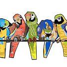 Seven Macaws by Ruud van Koningsbrugge