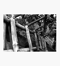 looking down the tree house Photographic Print