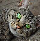 Just a Cat by Kerensa Davies