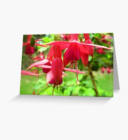 Fuchsia - Red & elegant flower Greeting Card