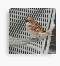 Sitting bird. Canvas Print