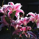 Stargazers, Backlit by Pat Yager