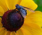 So Fly by Marcia Rubin