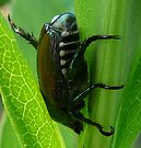 Japanese Beetle by Marcia Rubin
