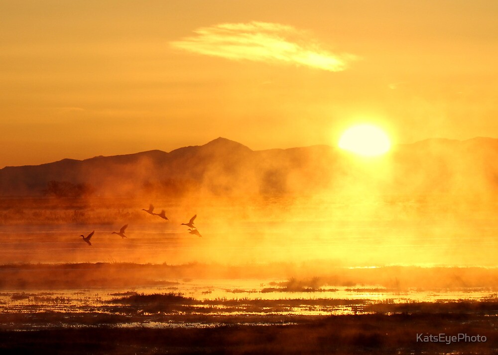 Ducks at Dawn by KatsEyePhoto