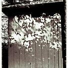 The Outhouse by vigor