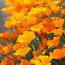 Field of Poppies by neva2010