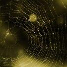 Web by KatsEyePhoto