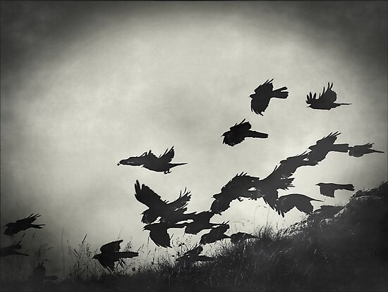Night Flight by Josephine Pugh
