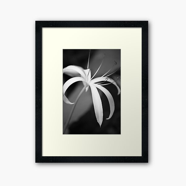 Swamp Lily Framed Art Print