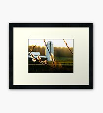 Sunset Pussy Willow Framed Print
